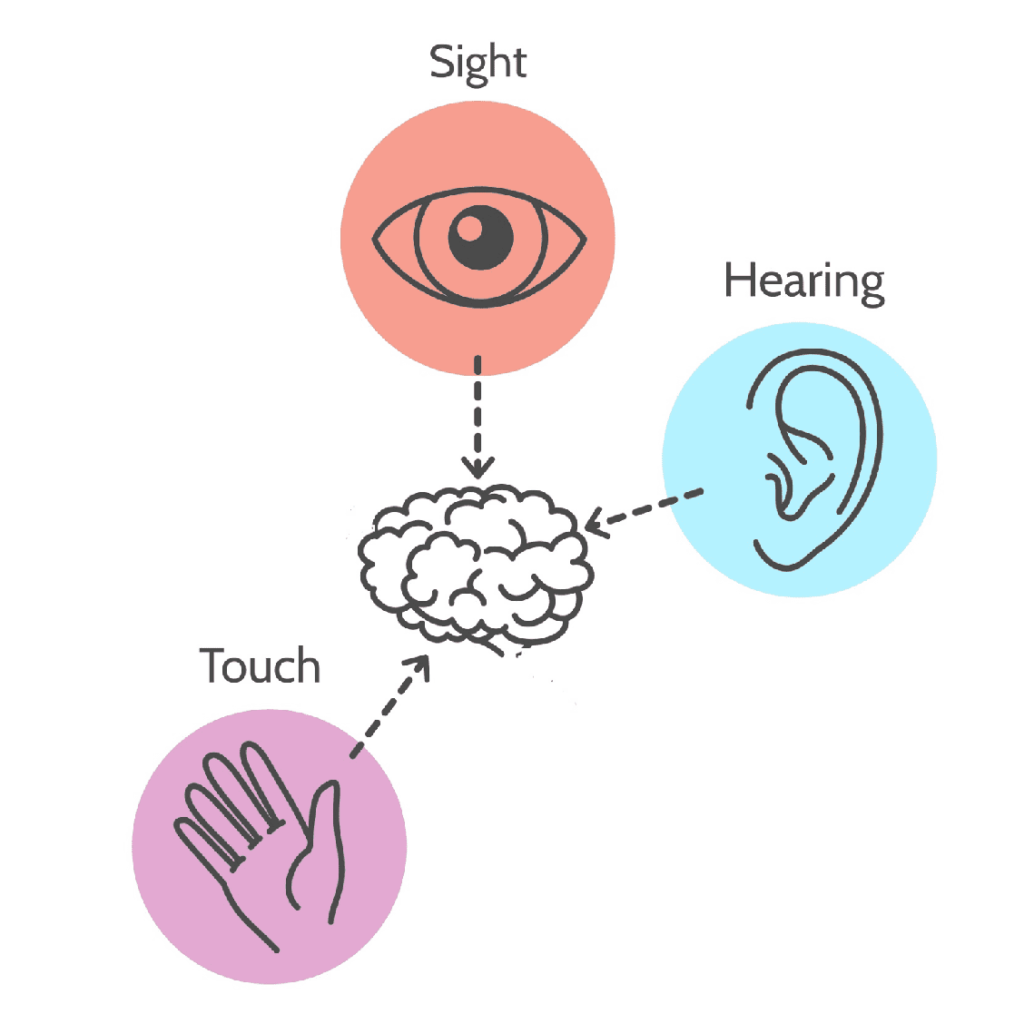 illustration of eye, ear, and hand with arrows point to the brain symbolizing sight, hearing, and touch senses