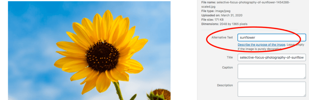 sunflower photograph in the WordPress block editor and a circle around the field where the alternative text for is entered